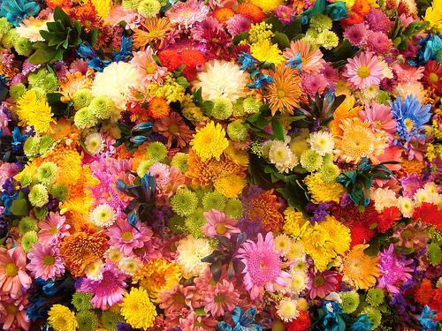 Significado de los sueños con flores