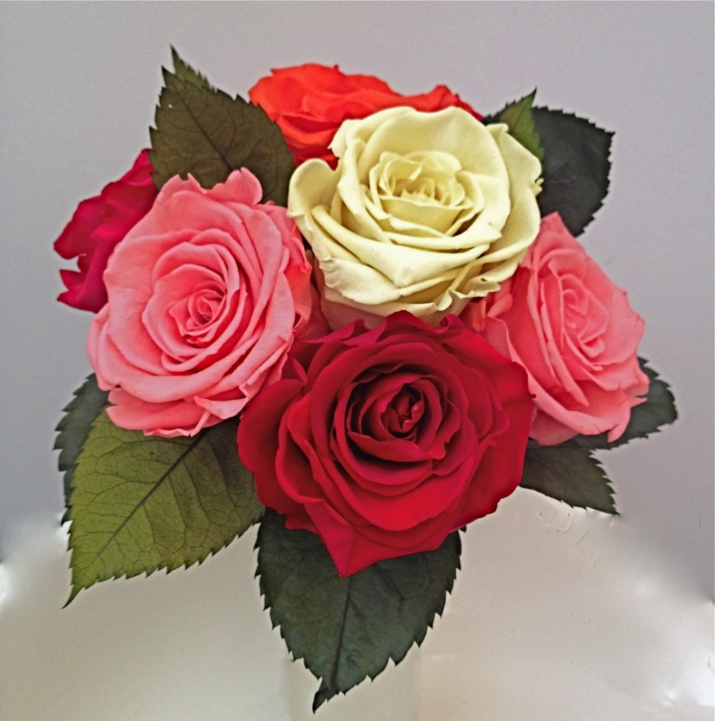 rosasdecolores