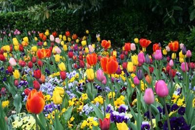 Que significa soñar con tipos de flores
