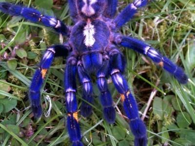 Que significa soñar con tarantulas de colores
